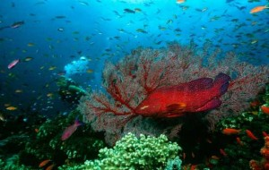 Seabed_Barrier+Reef_Sea_Thinkstock
