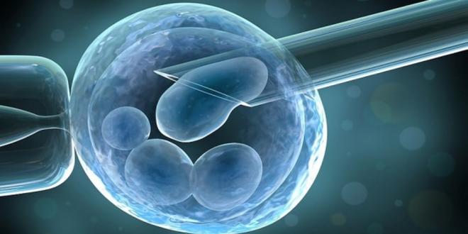 medicina cercetare cambrdige embrion descoperire etica