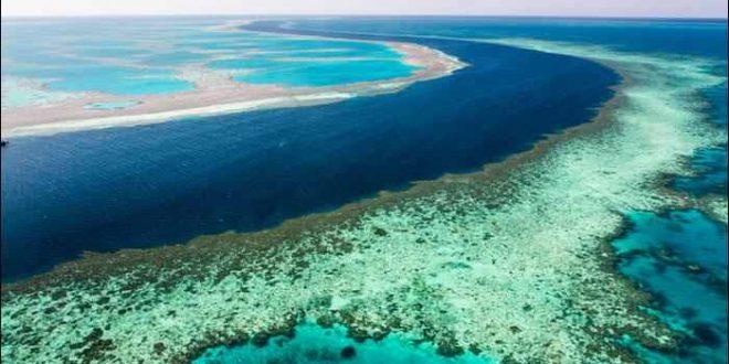 marea bariera de corali australia mediu inconjurator albire poluare incalzire globala