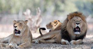 natura extinctie specii biologie studiu avertisment